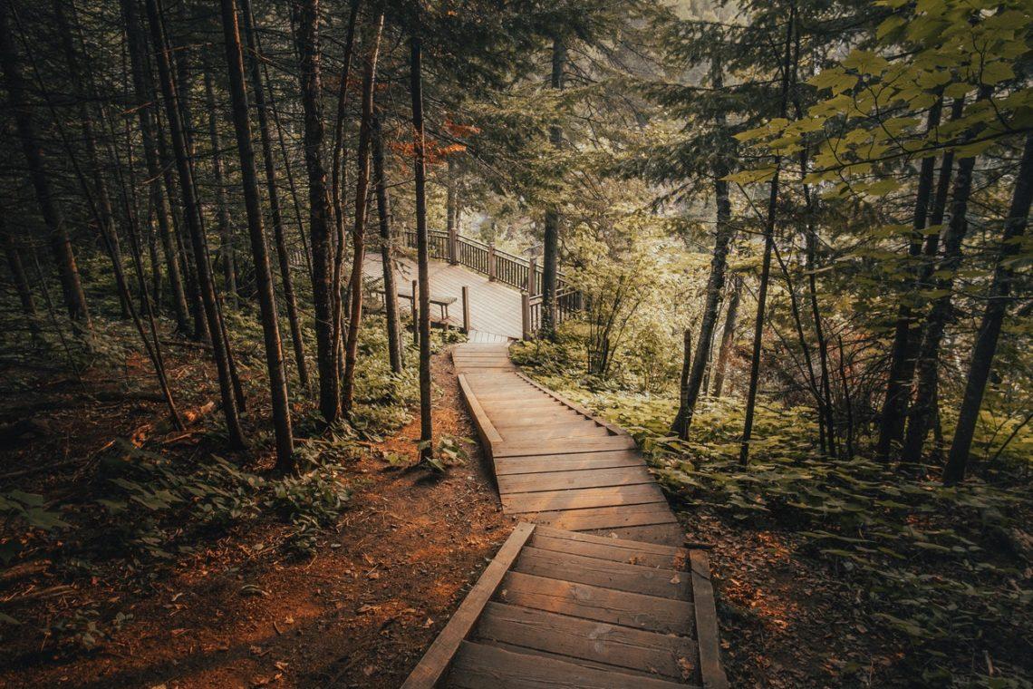 Drewniana dróżka w dół lasu