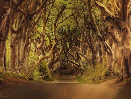 Aleja z wijących się drzew